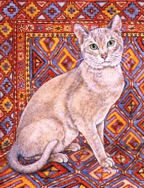 Abyssinian Carpet-Patch