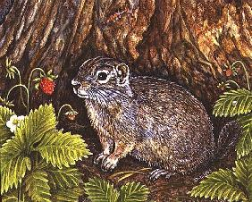 Eagle Creek, Wild Strawberry, Ground Squirrel, 1995 (acrylic on panel)