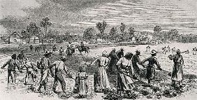 Labour in the Cotton Fields, Hoeing the Young Plants, illustration from ''Harper''s Weekly'', 1867,