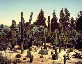 Cactus Garden / California / Photo, 1902