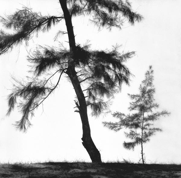 Form of tree (b/w photo)