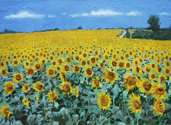 Field of Sunflowers, 2002 (oil on canvas)