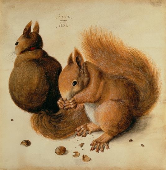squirrels albrecht d rer als kunstdruck oder handgemaltes gem lde. Black Bedroom Furniture Sets. Home Design Ideas