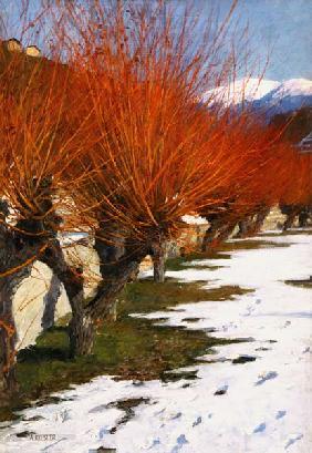 Kunstdruck von Alexander Koester - Weiden in der Wintersonne