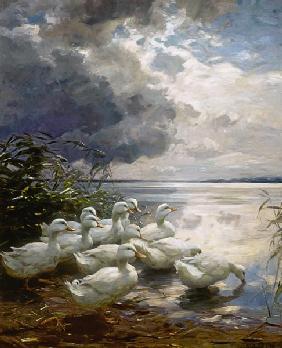 Kunstdruck von Alexander Koester - Enten an wolkenverhangenem See-Ufer