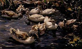 Kunstdruck von Alexander Koester - Neun Enten im Vorfrühling