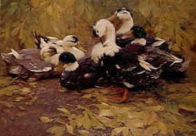 Kunstdruck von Alexander Koester - Sechs Enten im Herbstlaul