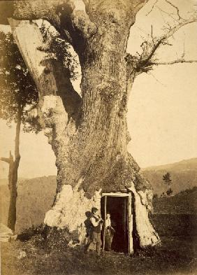 Two boys at the doorway of their treehouse, c.1870-80 (b/w photo)