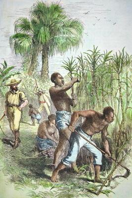 Slaves working a sugar field, c.1860 (coloured engraving) 02nd-