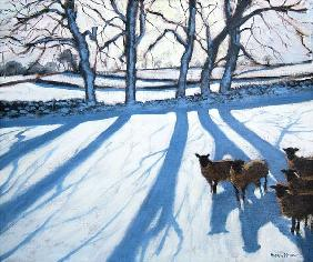 Sheep in snow, Derbyshire