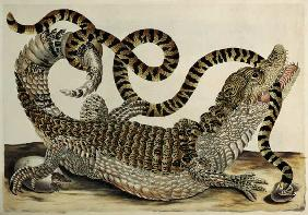 Alligator and Snake 1730
