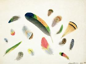 Studies of Feathers 1855  on