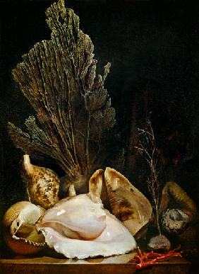 Still Life of Shells and Coral