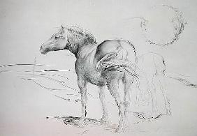 Horses at Coolmore, 1990 (charcoal on paper)