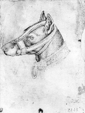 Head of a muzzled dog, from the The Vallardi Album
