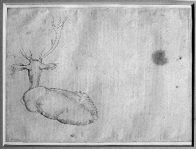 Resting stag, seen from behind, from the The Vallardi Album
