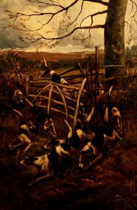 Over the Fence, or Hounds in Full Cry 1900