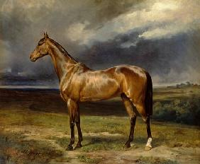 'Abdul Medschid' the chestnut arab horse 1855