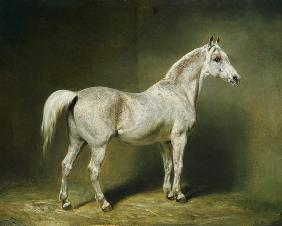 'Beatrice', the white arab saddlehorse of Helmuth Graf von Moltke 1855