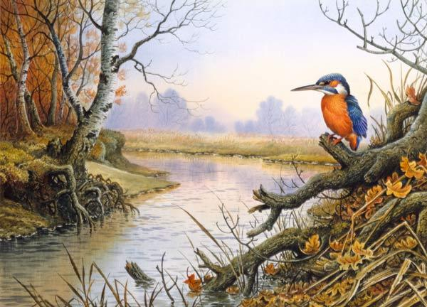 Kingfisher: Autumn River Scene