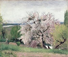 Fruit Tree in Blossom, Bois-le-Roi