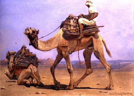 Camel Preparing to Lie Down - Carl Haag als Kunstdruck ...