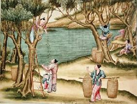 Collecting mulberries, from a book on the silk industry