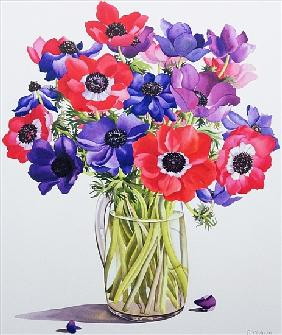 Anemones in a glass jug