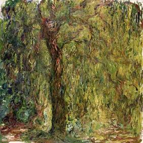 Weeping Willow 1918-19