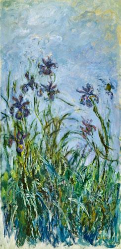 Monet, Claude : Iris Mauves