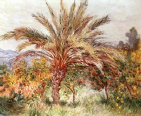 Palm Tree at Bordighera c.1884