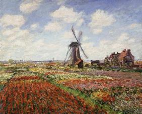 Monet, Claude : Tulip Fields with the Rijn...