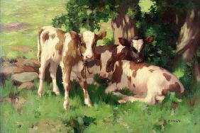 Three Calves in the Shade of a Tree 15th