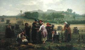 Harvesting Poppies in Picardy 1860