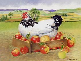 Hen in a Box of Apples, 1990 (acrylic)