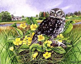 Owl in Grass Nest with Primulas