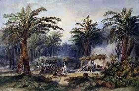 The Fabrication of Palm Oil at Whydah, West Coast of Africa c.1845  on