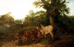 Donkeys in a Glade