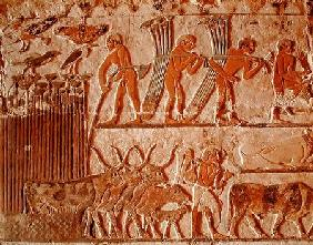 Harvesting papyrus and a group of cows, Old Kingdom