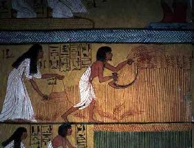 Detail of a harvest scene on the East Wall, from the Tomb of Sennedjem, The Workers' Village, New Ki 20th