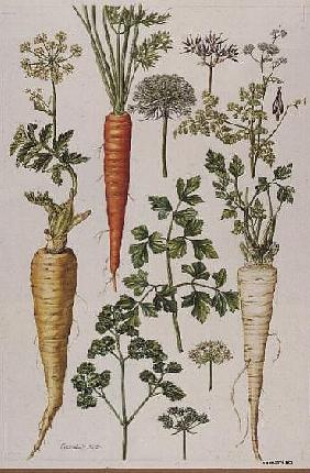 Carrot, Parsnip and Parsley (w/c)