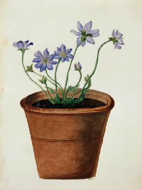 Purple Flowers in a Terracotta Pot c.1825  on