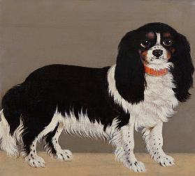 A Cavalier King Charles Spaniel (pair of 64045)