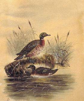 Two Ducks by a Reeded Bank c.1890  on