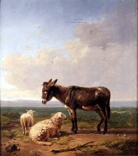 Kunstdruck von Eugène Joseph Verboeckhoven - Ass and Sheep
