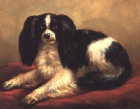 Kunstdruck von Eugène Joseph Verboeckhoven - A King Charles Spaniel Seated on a Red Cushion
