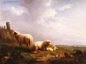 Kunstdruck von Eugène Joseph Verboeckhoven - Sheep and chickens in a landscape