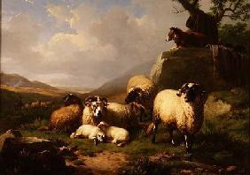 Kunstdruck von Eugène Joseph Verboeckhoven - Sheep in a Landscape