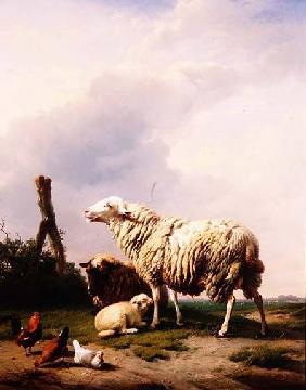 Kunstdruck von Eugène Joseph Verboeckhoven - Sheep and Poultry in a Landscape