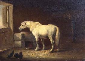 Kunstdruck von Eugène Joseph Verboeckhoven - White horse in a stable (panel)